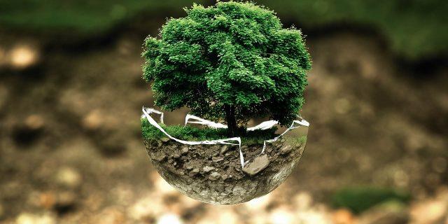 Agroenergia: cos'è e gli utilizzi